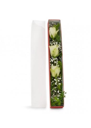 KUTUDA 3 BEYAZ GÜL - ısparta çiçek siparişi