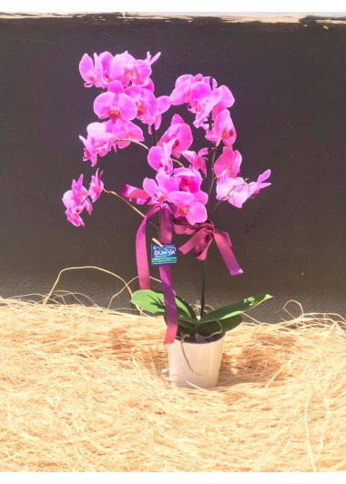 SERAMİKTE ÇİFT DALLI MOR ORKİDE - ısparta çiçekçi