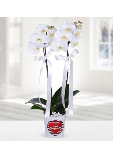 SENİ SEVİYORUM TEMALI ÇİFT DALLI BEYAZ ORKİDE - ısparta çiçek